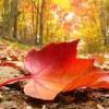Hazan Mevsimi – Ulm`lü Piro`yu Kaybettik